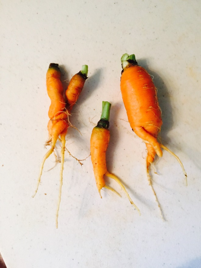 But we also had a lot of wonky carrots.