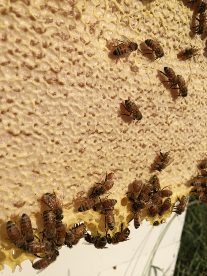 This is capped honey.
