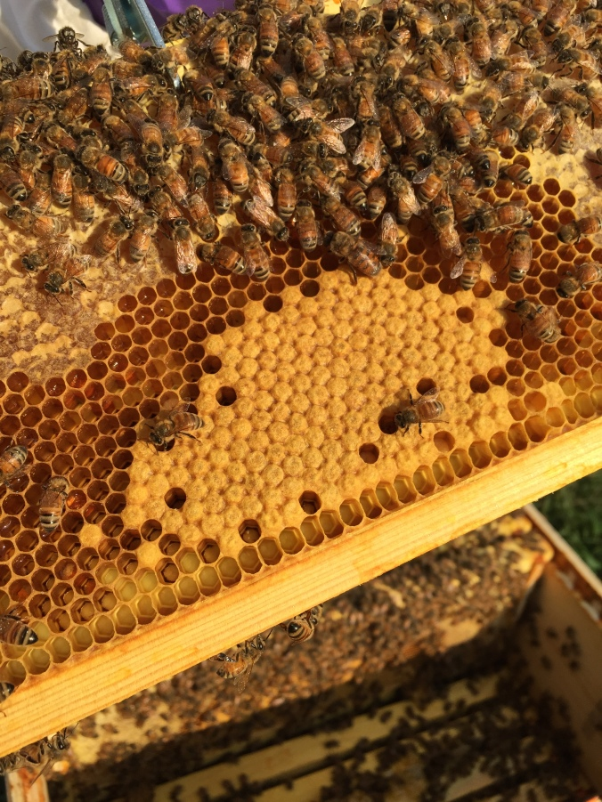 The top portion with all of the bees on it is honey and the bottom portion that is an opaque yellow is made up of brood cells.