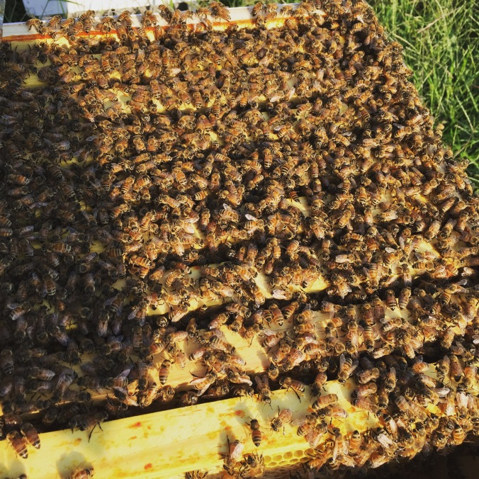 That is a lot of bees!